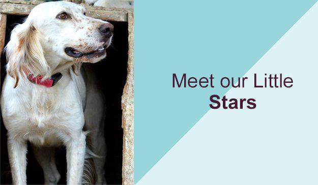 Meet our Little Stars